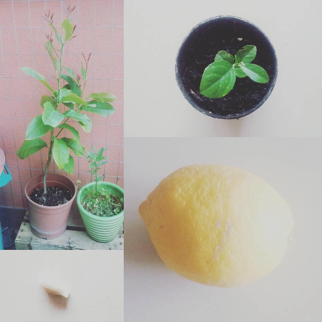 Orto in piccoli spazi equo eco e vegan for Piccoli piani eco compatibili