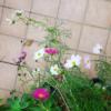 fiori_urbani